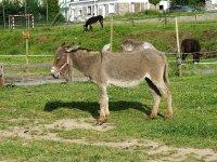 burro preparado