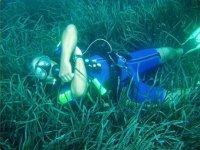 Entre algas