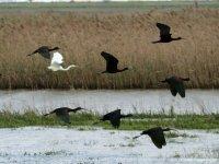 沼泽地鸟类