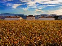 Bodegas Rioja Vega