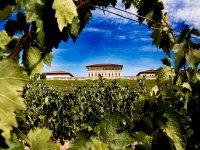 Vinedos en La Rioja