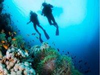 En las profundidades marinas