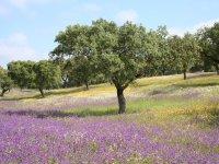 Coloridos campos dehesa toledana