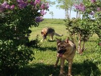 Perros de la finca en Calera