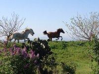 Caballos trotando en Toledo