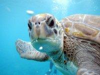 Turtles in Tenerife