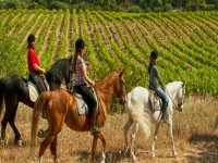 paseando a caballo por los vinedos