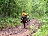 路线在森林里骑马