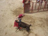 Toreando在拉里奥哈小母牛Capeas等待小母牛