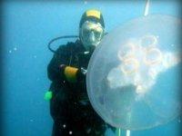 Siente la fauna marina