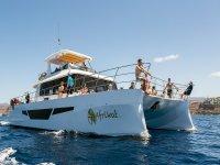 Afrikat catamaran en Gran Canaria