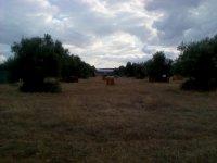 IMG_20111031_162550