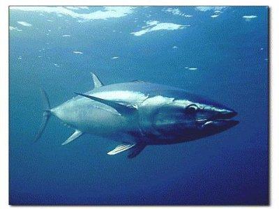 Ametlla Charter Pesca