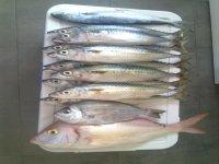 Salidas de pesca en Tarragona