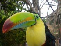 A beautiful toucan