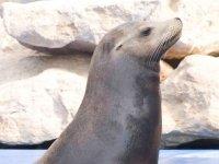 enjoy the sea lions