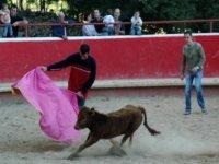 Toreando在capea一只牛犊