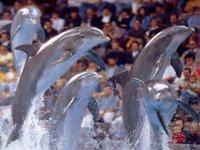 exhibicion de delfines