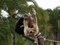 visita la isla de los primates
