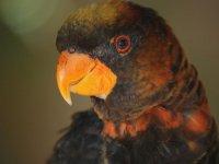 conoce a nuestros papagayos