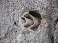 Fossili e spiagge