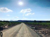 Paseo entre vinas
