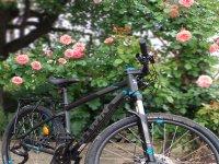 Modelo de bici en alquiler