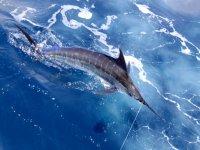Marlin en la popa