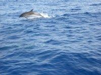 Un salto de delfín