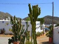 Cactus en el pueblo de Sopalmo