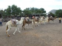 Camels in a row