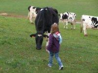 Peque entre las vacas