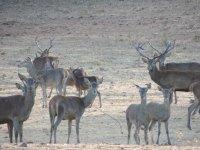 Manada de ciervos a nuestro paso