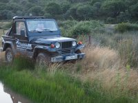 Between the reeds with the SUV