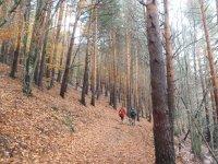 Robles y pinos en Tejera Negra