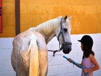 Aseando al caballo en la hipica de Tarragona