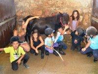 Grupo del campamento ecuestre en el Catllar