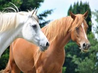 Horses cared for