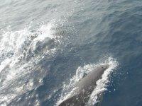 Navega entre delfines