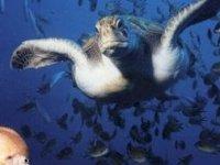 Avista tortugas marinas