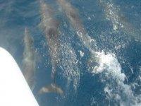Navega con los delfines