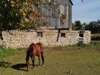el caballo en la hipica