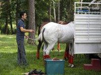 preparazione del cavalli