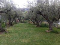 Zona ajardinada con arboles