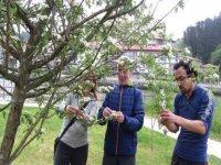 cogiendo el fruto de un arbol