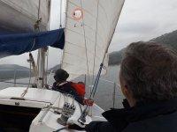 在海上帆船帆船雄鹿
