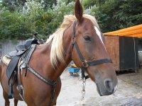 caballo listo para la ruta