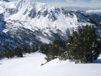 Abetos entre la nieve