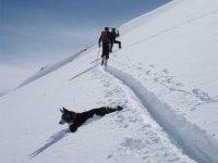 Excursion con el perro