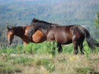 nuestros caballos en la naturaleza
